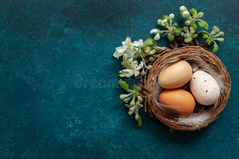 Пасхальные яйца †украшения пасхи «в гнезде и цвести ветвях яблони взгляд сверху, конец вверх, плоское положение стоковые фото