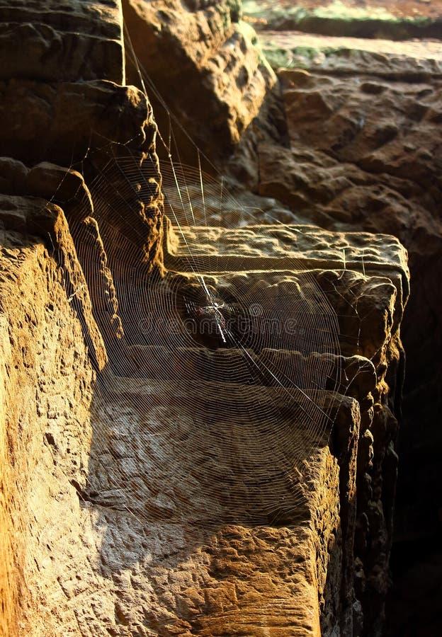 Паутина в лучах солнца стоковая фотография rf