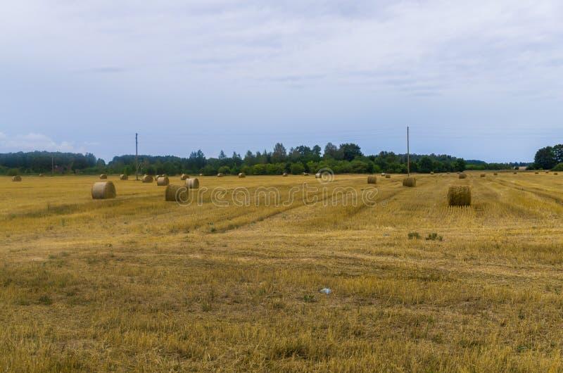 Пачки сена свертывают на обрабатываемой земле, переплетенном сене в поле стоковые фото