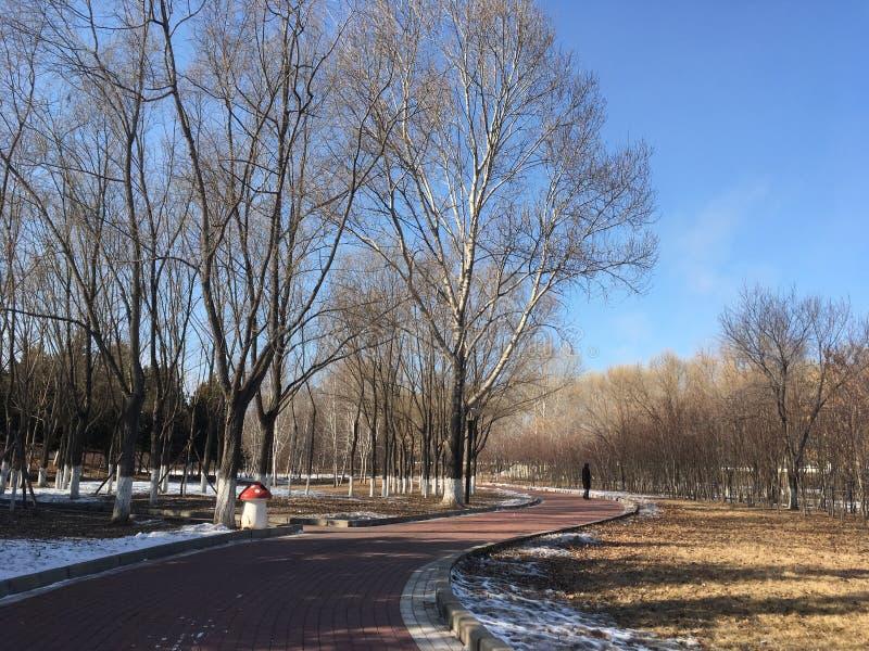 Парк обочины зимы стоковые фотографии rf