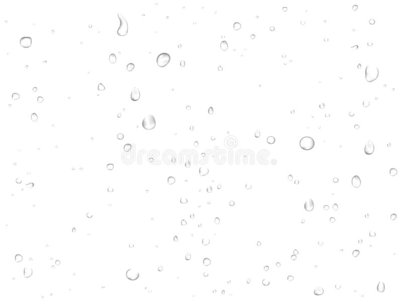 Vector rain water drops on white background. Pure realistic droplets condensed royalty free illustration