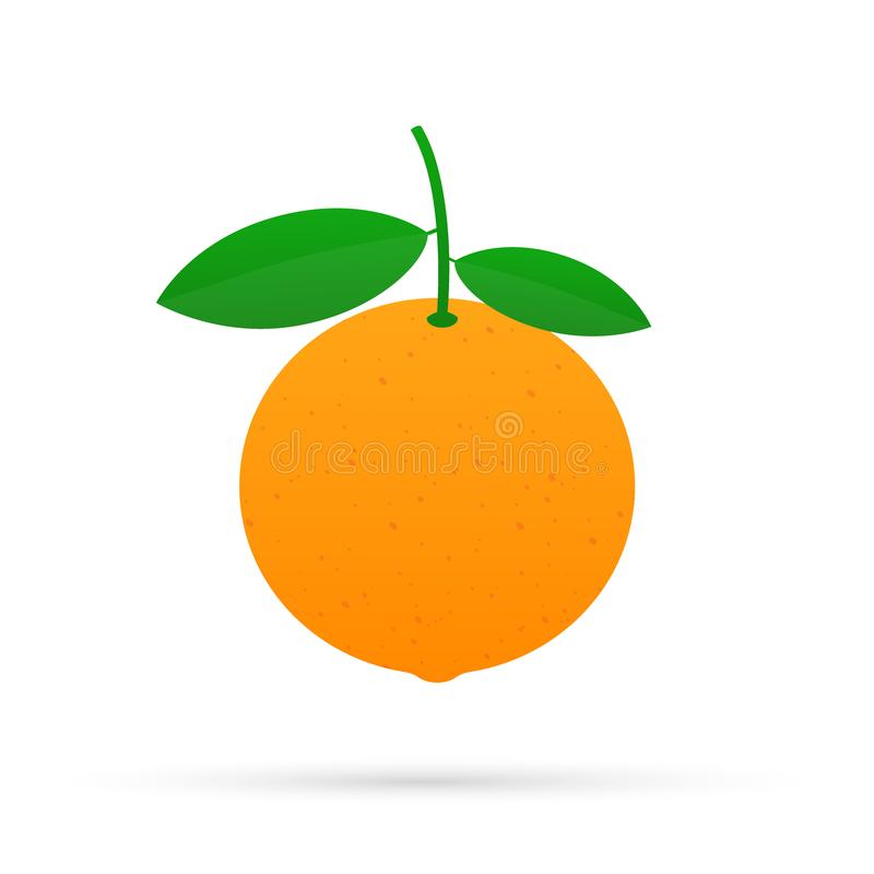 Orange with leaves whole and slices of oranges. Vector illustration of oranges. Orange with leaves whole and slices of oranges. Vector stock illustration of stock illustration