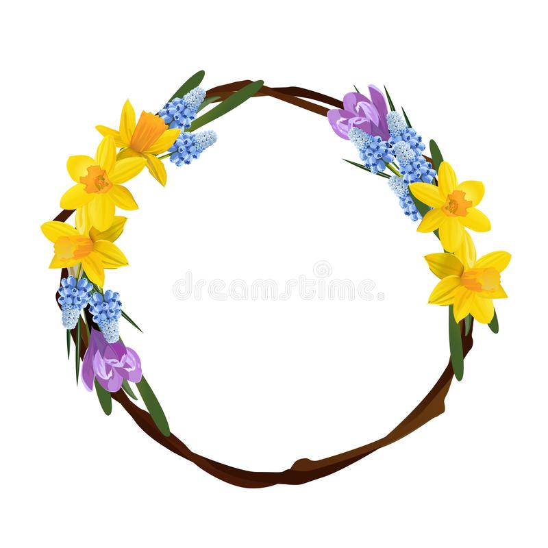 Floral design. Spring yellow daffodils or narcissus wreath bow. Vector illustration. royalty free illustration