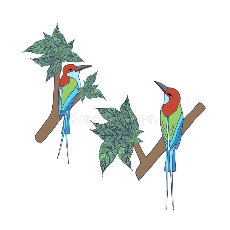 Blue Throated Bee Eaters standing on the tree. Colorful birds standing on the tree , isolated on white background, illustration stock illustration