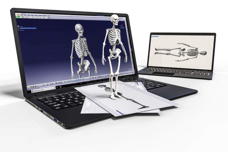 перевод 3D представляя компьютерное проектирование человеческого скелета бесплатная иллюстрация