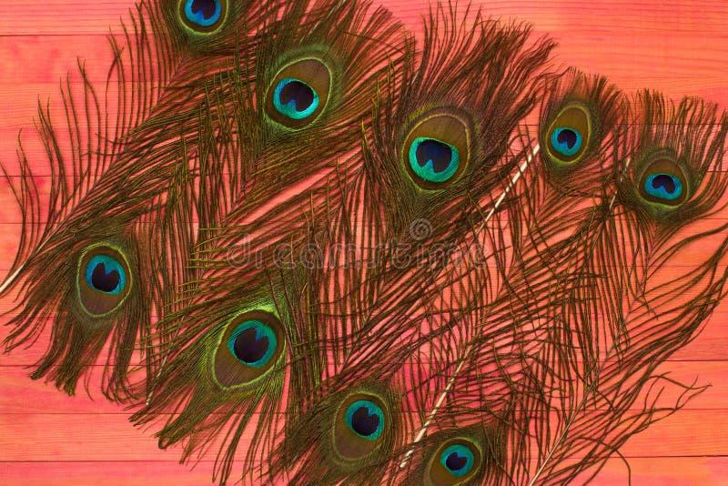 Пер павлина кладут на розовую древесину стоковое фото rf