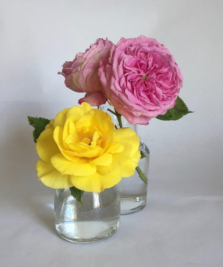 Пинк и желтые розы в стеклянных вазах на белой предпосылке стоковые фотографии rf
