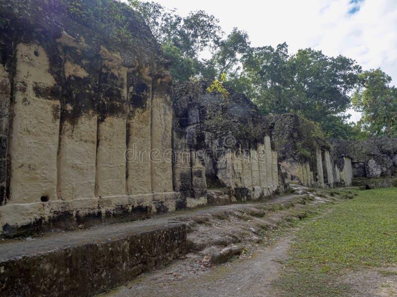 Пирамиды в городе нации самом значительном майяском парка Tikal, Гватемалы стоковое фото rf