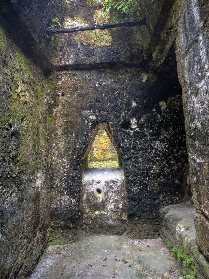 Пирамиды в городе нации самом значительном майяском парка Tikal, Гватемалы стоковая фотография rf