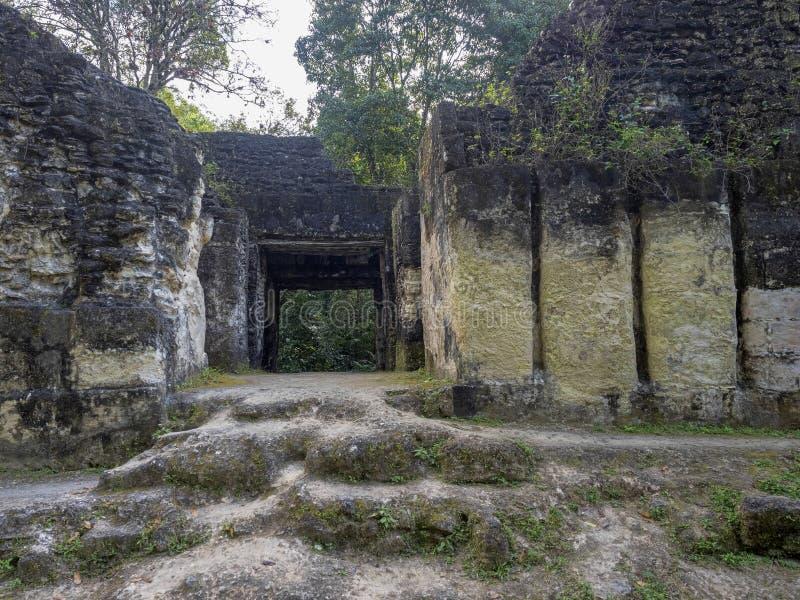 Пирамиды в городе нации самом значительном майяском парка Tikal, Гватемалы стоковые фото