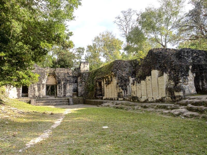 Пирамиды в городе нации самом значительном майяском парка Tikal, Гватемалы стоковые фотографии rf