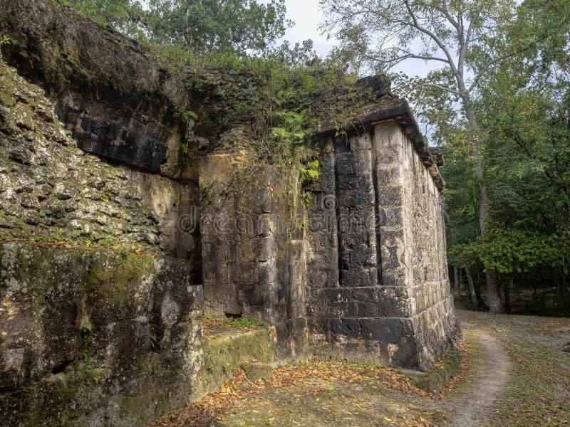 Пирамиды в городе нации самом значительном майяском парка Tikal, Гватемалы стоковое изображение rf