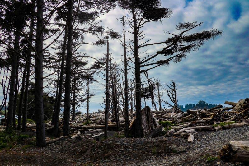 Пляж Тихоокеанского побережья в олимпийском национальном парке, Вашингтоне, США стоковое фото rf