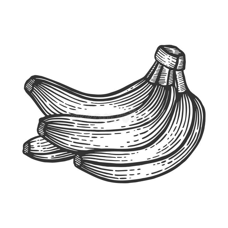 Плоды банана делают эскиз к гравировать вектор иллюстрация вектора