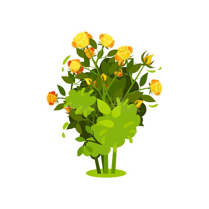 Плоский значок вектора куста с яркими розами желт-апельсина и зелеными листьями Кустарник с красивыми цветками Завод сада иллюстрация вектора