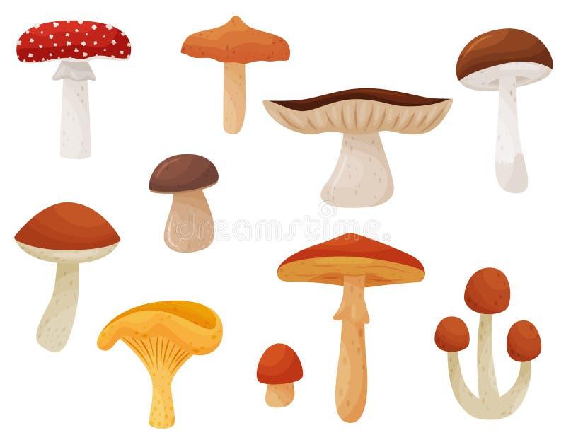 Плоский набор вектора грибов Съестные и ядовитые грибки Натуральные продучты Элементы для книги или плаката детей бесплатная иллюстрация