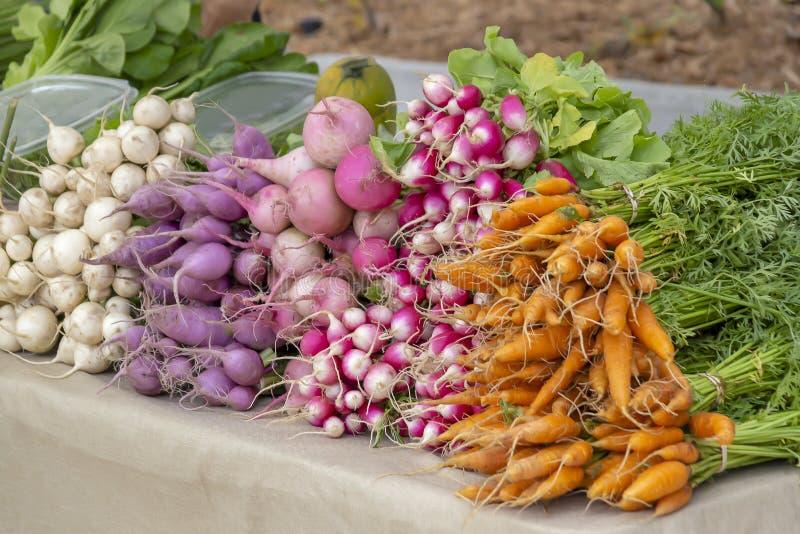 Пук свежо скомплектованных морковей, редиска, свеклы вместе с другими овощами корня заполняет таблицу на зеленом рынке фермеров стоковые изображения