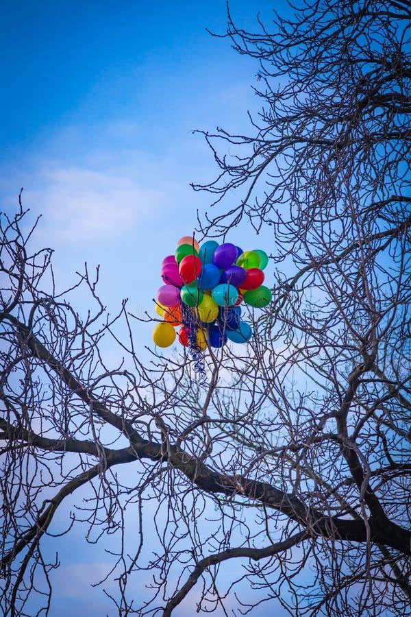 Пук ярких покрашенных воздушных шаров вставленных на дереве в Праге стоковые фотографии rf