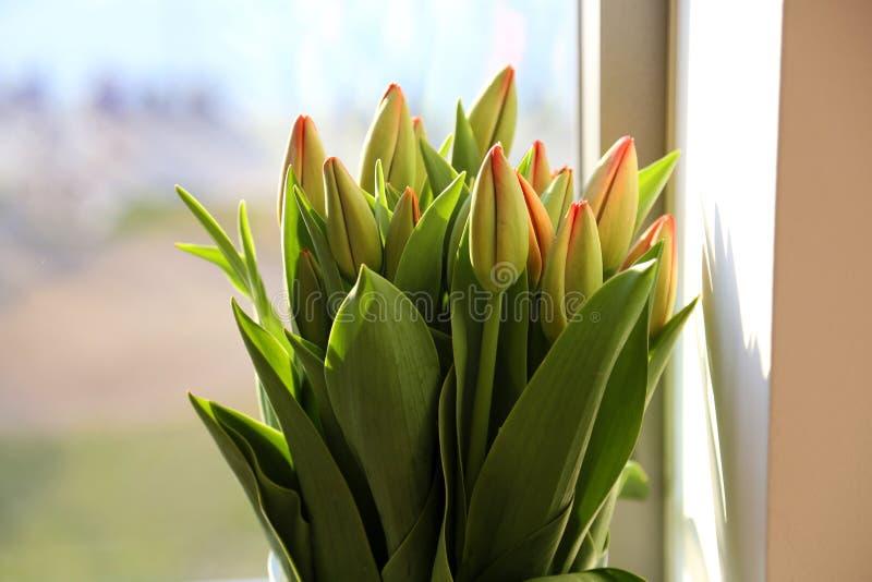 Пук тюльпанов лежа на полке хранения в магазине флориста стоковое изображение