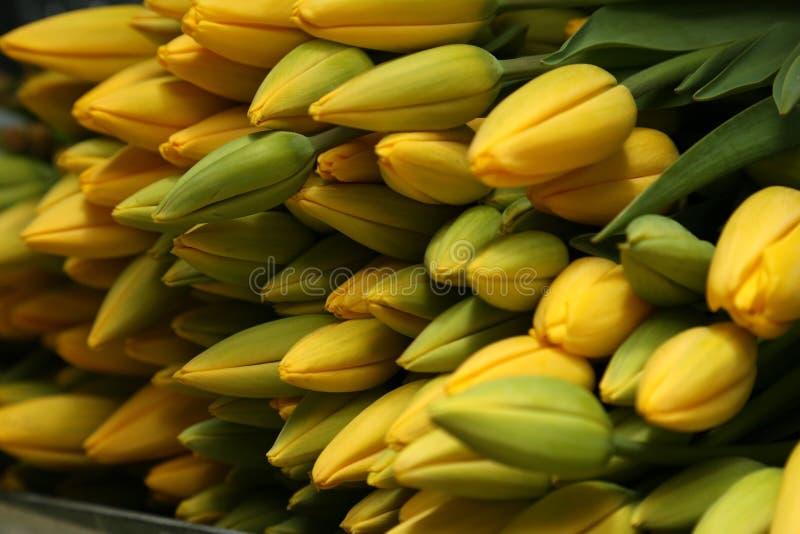 Пук тюльпанов лежа на полке хранения в магазине флориста стоковые изображения