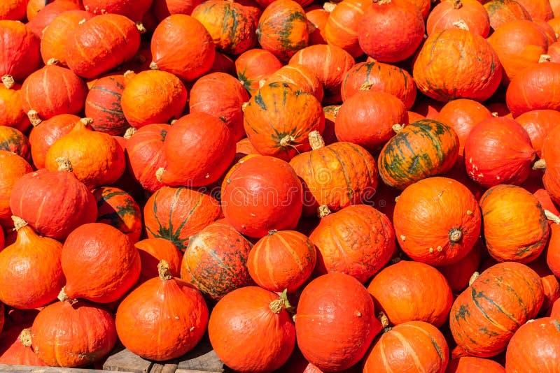 Пук оранжевых желтых тыкв стоковое фото