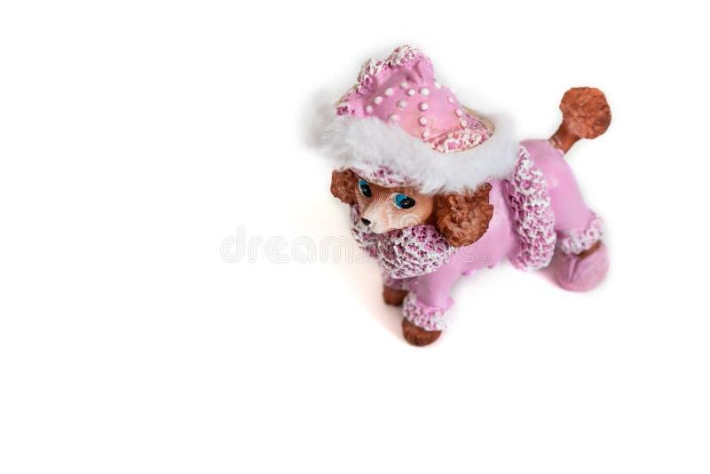 Пудель игрушки розовый на белой предпосылке стоковые фотографии rf
