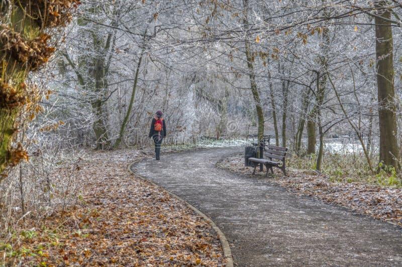 Пути парка в предыдущей зиме стоковая фотография rf