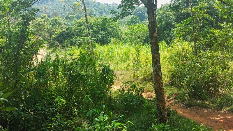 путь в джунглях в Таиланде стоковые изображения rf