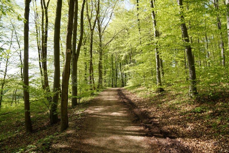 Путь через лес во дне лета ярком стоковое изображение