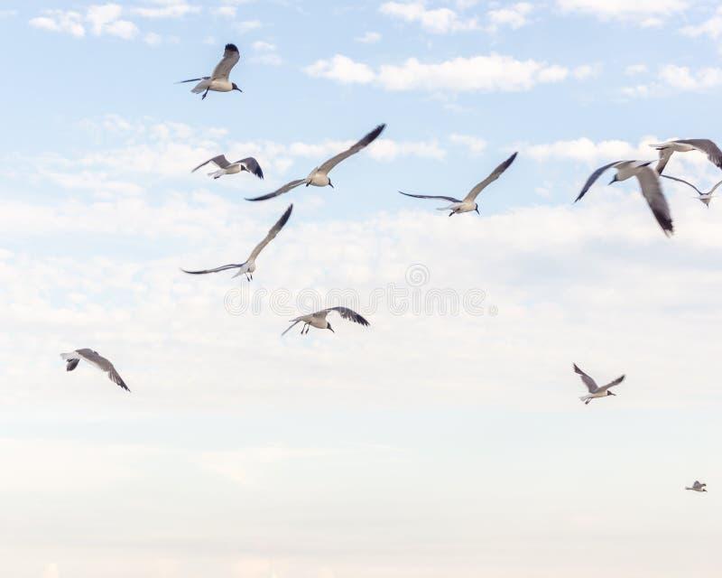 Птица летая высоко в небо стоковые изображения