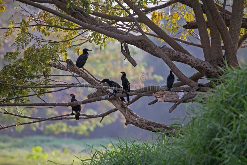 Птицы имея мирную болтовню на озере Karanji в Майсуре, Индии стоковое фото rf