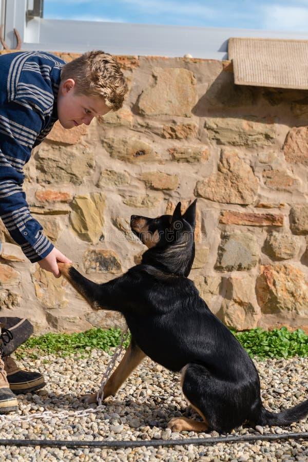 Предназначенный для подростков мальчик делая некоторые основы профессии с его собакой стоковая фотография rf