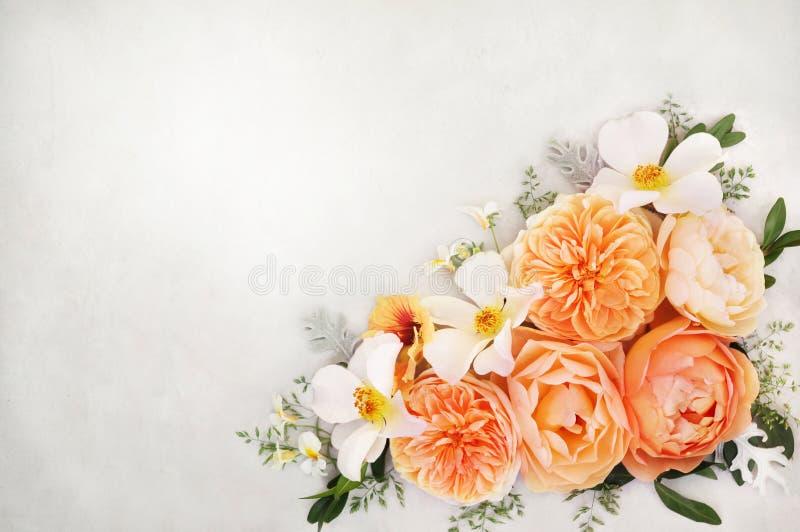 Предпосылка абрикоса и состава цветков белых роз стоковое изображение