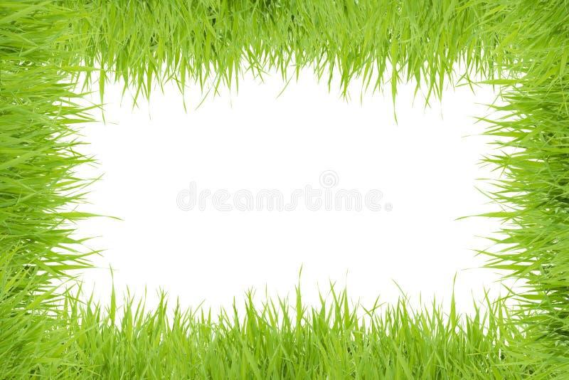 Предпосылка рамки травы стоковые изображения rf