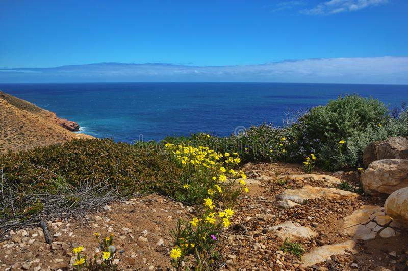 Прибрежные полевые цветки в национальном парке Kalbarri в западной Австралии стоковые изображения