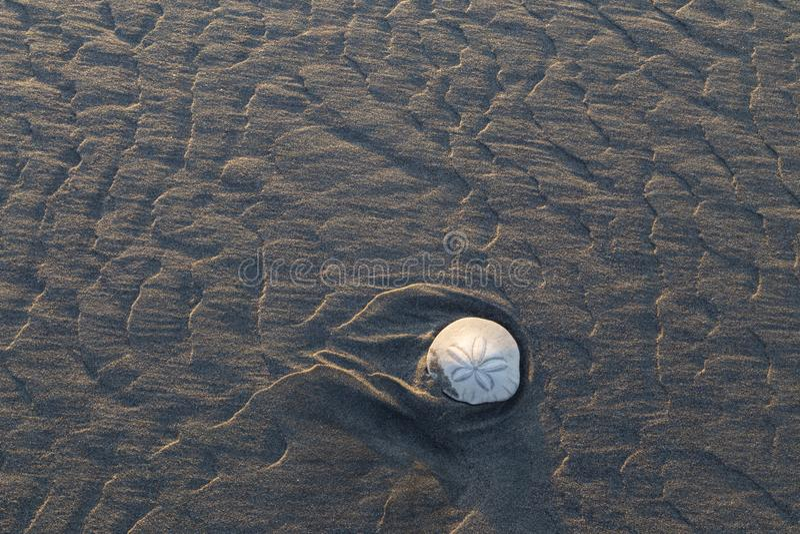 Приставанный к берегу доллар песка во время отлива стоковое фото
