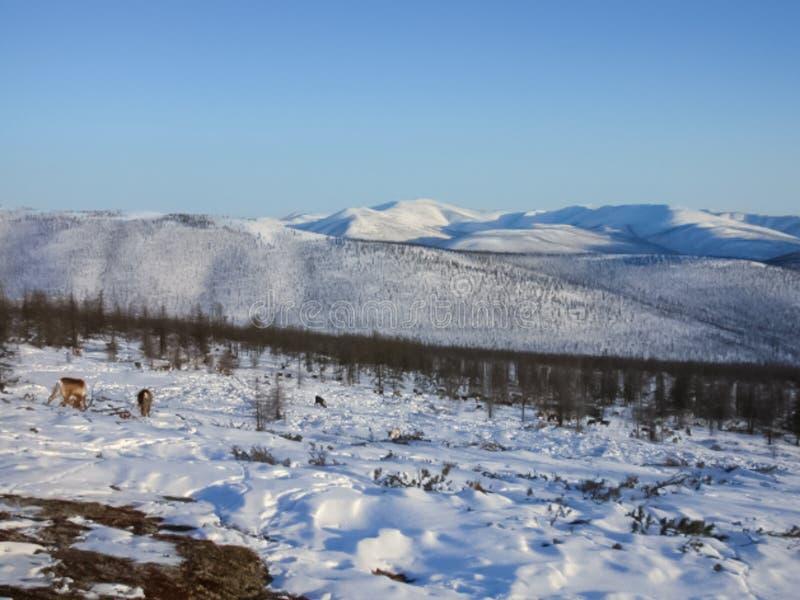 Chukotka хост ұясы