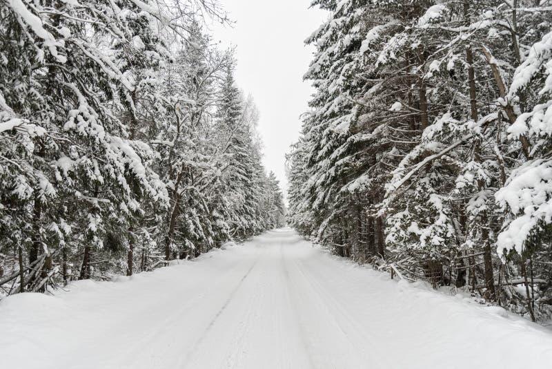 Проселочная дорога зимы с лесом ели на стороне стоковое изображение