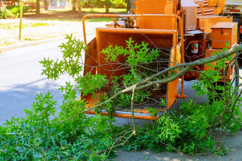 Профессиональные садовники кладут ветви уравновешенного дерева в деревянные chipper и грузовой пикап и обслуживание в весеннее вр стоковое фото