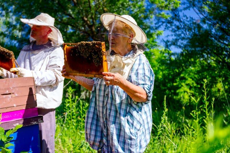 2 пожилых apiarists, beekeepers проверяют пчел на соте стоковая фотография