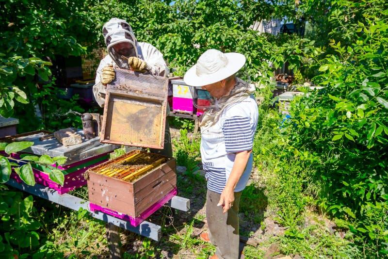 2 пожилых apiarists, beekeepers проверяют пчел на соте стоковые изображения