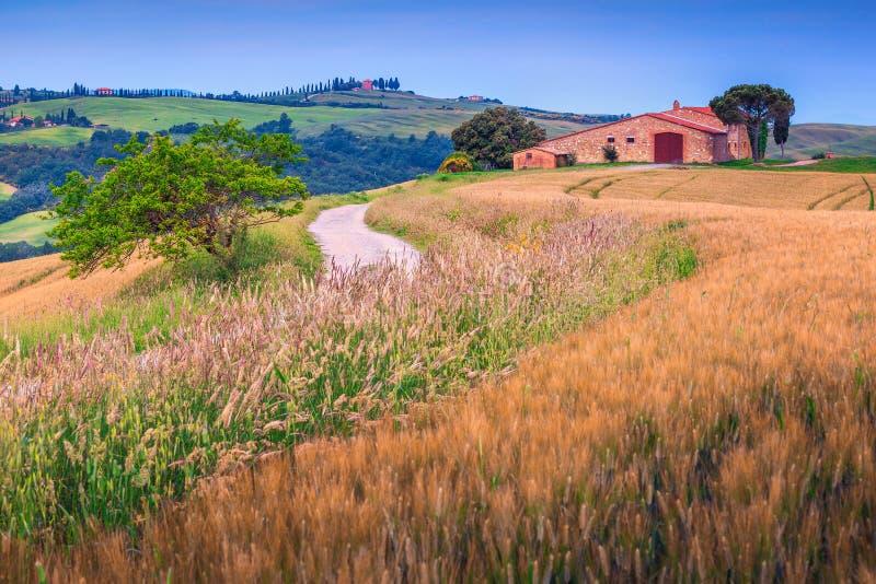 Поля зерна лета и каменный сельский дом в Тоскане, Италии, Европе стоковое изображение