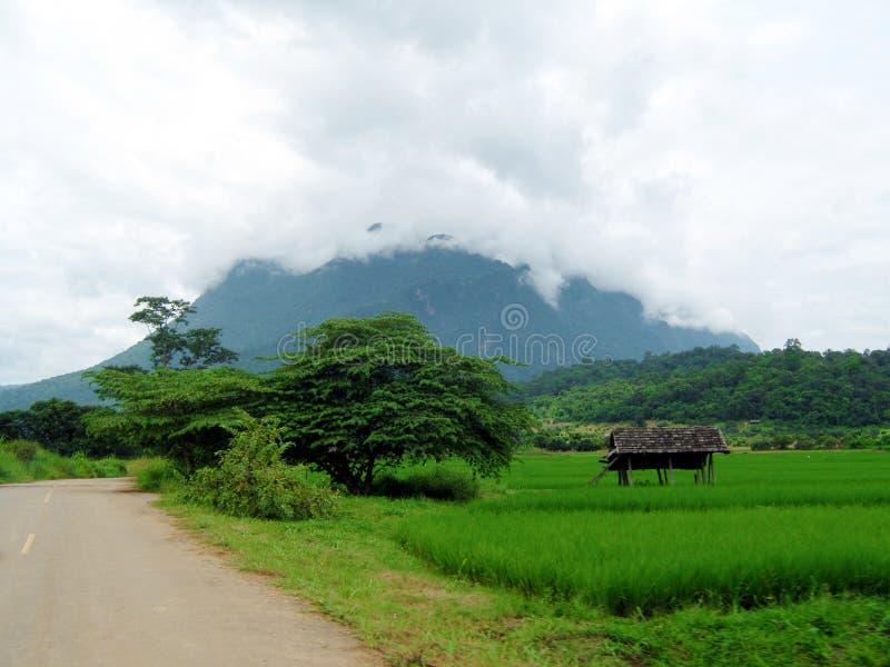 Поля риса на предпосылке горы Гора в тумане стоковая фотография