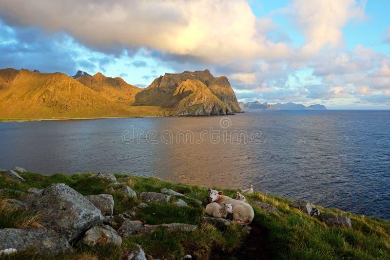 Полуночное солнце на островах Lofoten, Норвегии стоковые фото