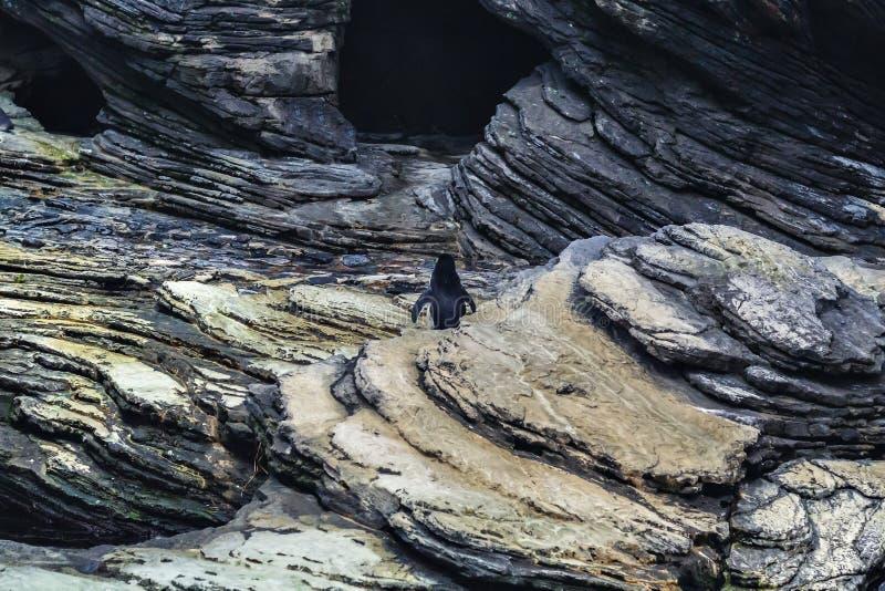 Положение пингвина стоковые изображения