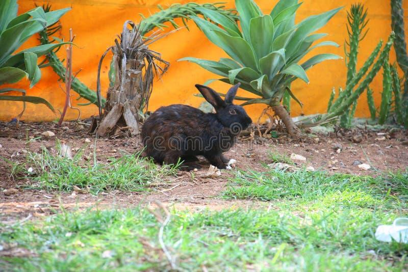 помадка кролика стоковое фото rf