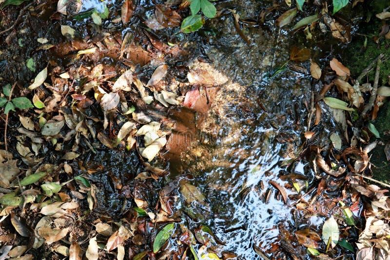 Подача rill осени Водопад природы - предпосылка изображения стоковые фотографии rf
