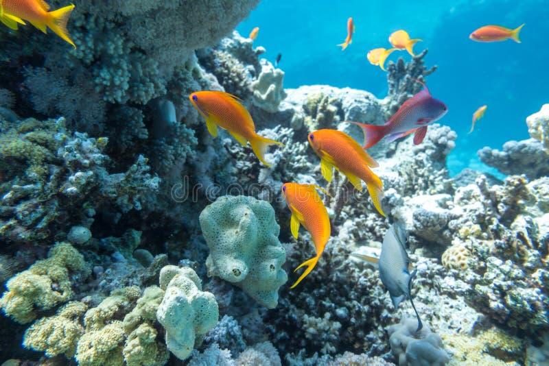 Подводный коралловый риф с группой в составе тропические рыбы стоковое фото rf