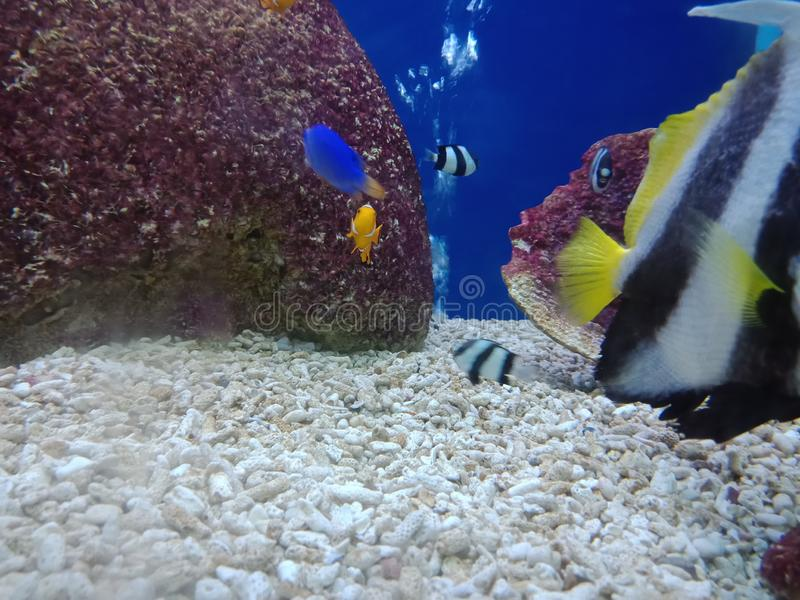Поднимать рыб, так, что красота будет навсегда 5 стоковое фото