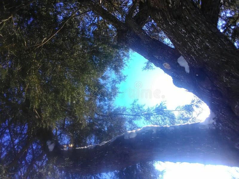 Под деревом можжевельника со снегом на ветвях стоковые изображения